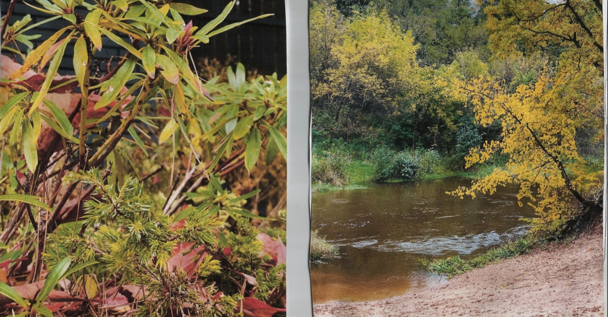 Konkurs fotograficzny o jesieni